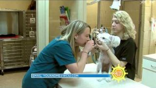 I Love My Job: Veterinarian