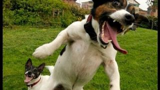 BEST FUNNY DOGS COMPILATION LONG (2013 - 2014)
