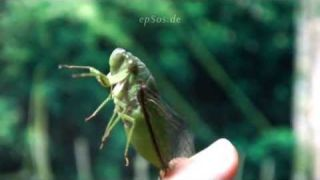Funny Insect Singing Electronic Bug Sounds