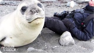 Encounter with Baby Elephant Seal | Up Close and Personal!