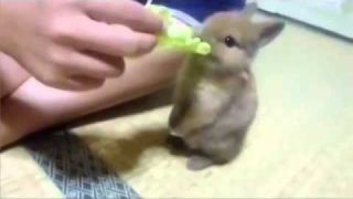 OMG Funny Baby Bunny Compilation!
