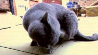 How To Breed Cats | Storyteller Media