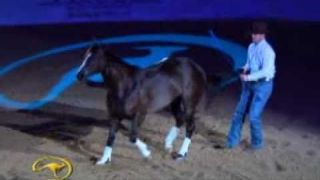 "Clinton Anderson with his amazing horse ""Mindy"" in Vegas 2010"