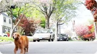Walking Dog With Drone | Lazy Man's Best Friend