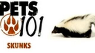Pets 101- Pet Skunks