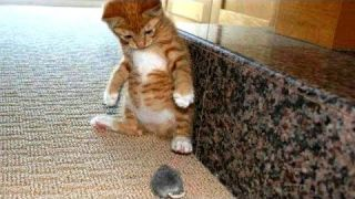 Cats scared of mice and birds - Funny cat compilation